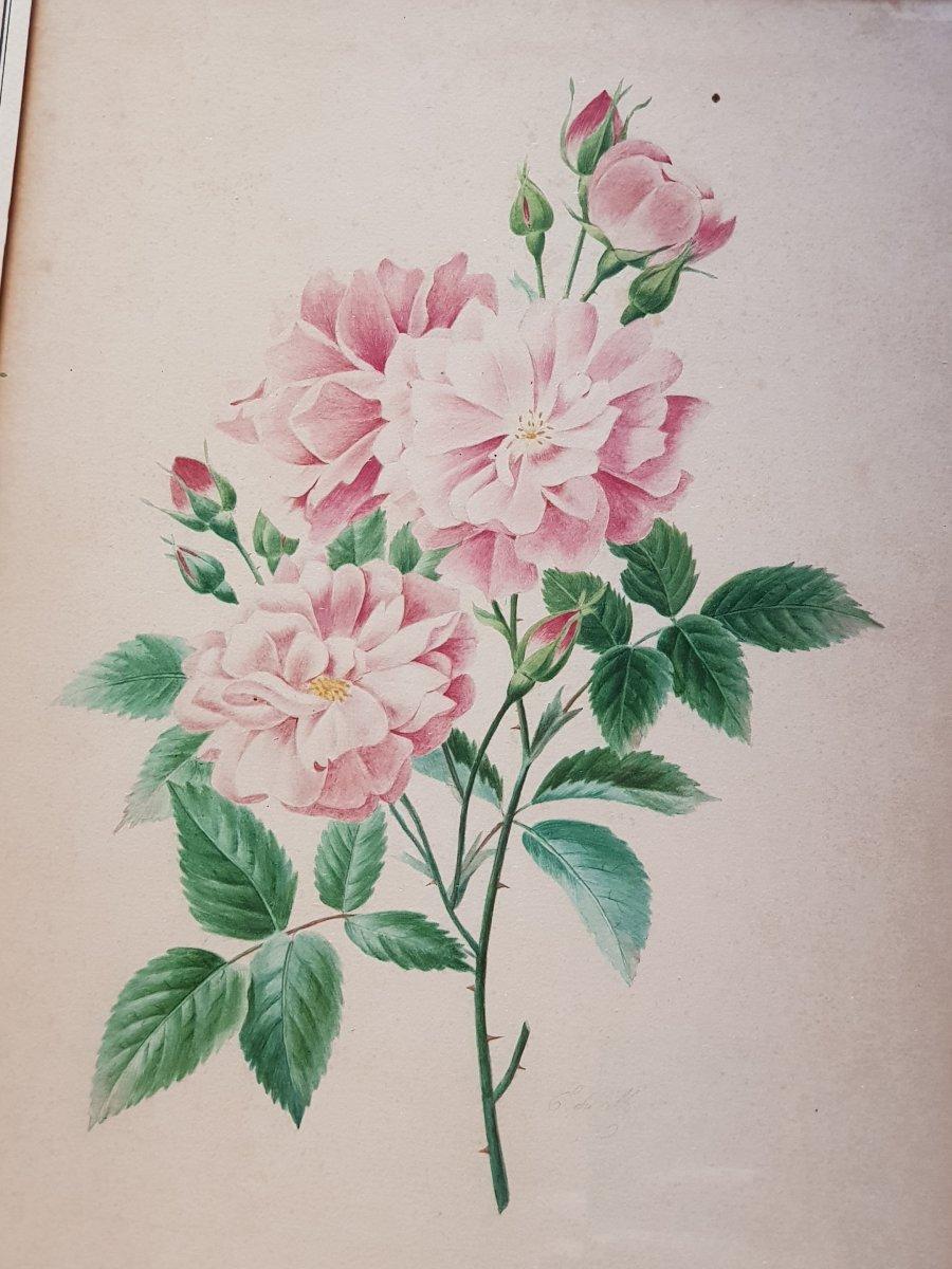 Lot De 3 Aquarelles Botaniques Signées  Bouquets De Fleurs Et Roses-photo-1