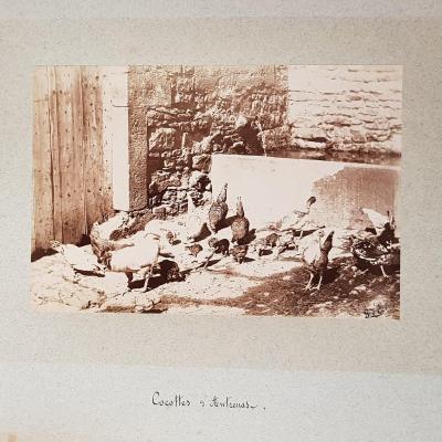 """Collection Of Photographs """"par Monts Et Par Vaux"""" Lozère, Garabit, Allier And Langeais"""
