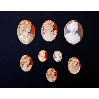 Collection Of Antique Shell Cameos