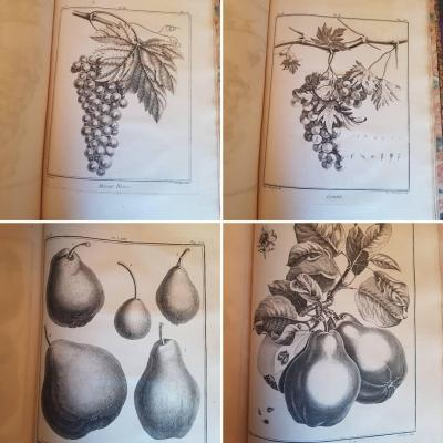 Duhamel Du Monceau Botanique XVIIIth Fruit Trees 128 Engravings