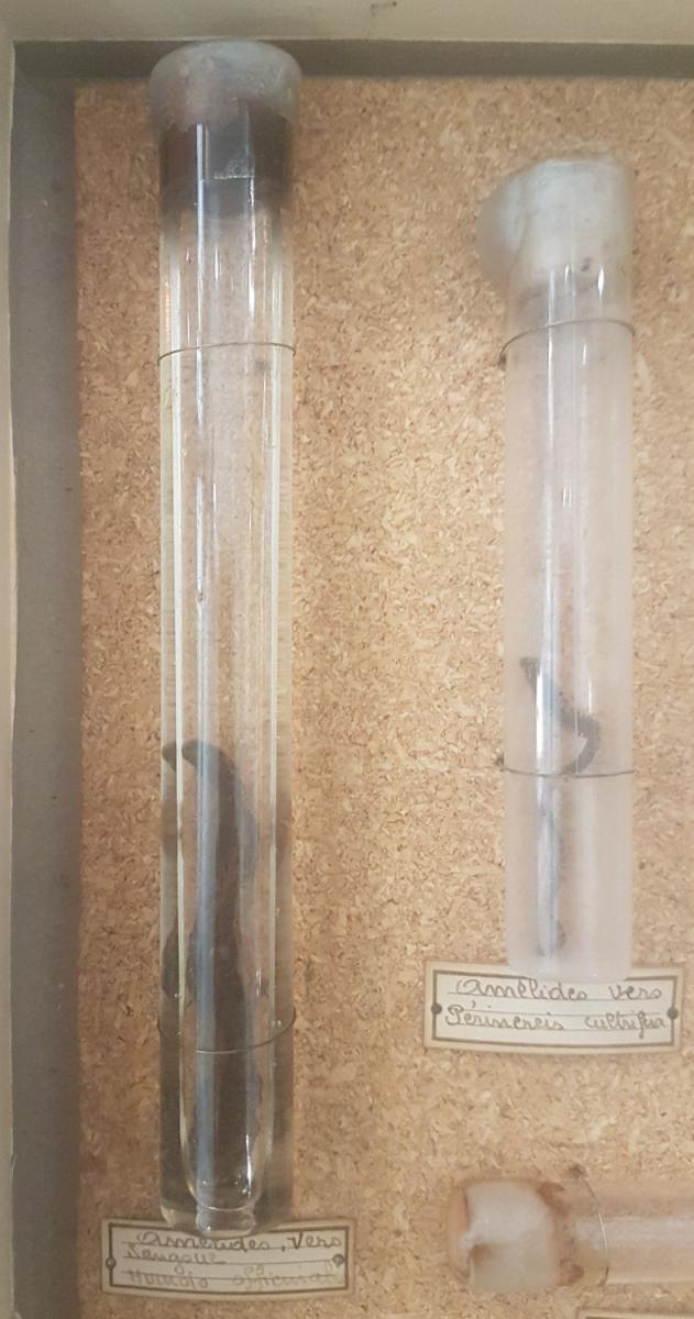 Boite Entomologique didactique Divers Spécimens-photo-4