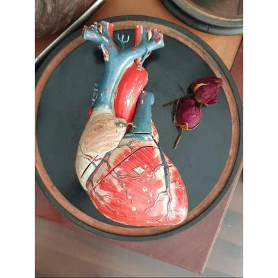 Object Of Curiosity: Anatomical Didactic Heart In Papier-mâché