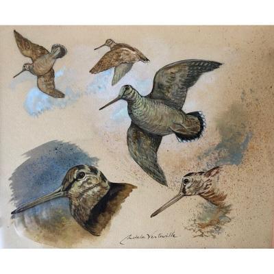 Christian De La Verteville, Watercolor And Gouache: Étude De Bécasse
