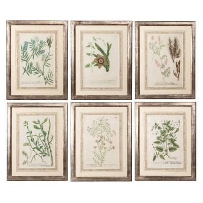 Série De Six Gravures De Botanique, 18e Siècle