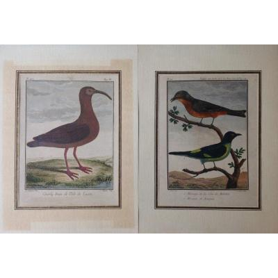 A Lot Of Two Colorful Engravings 19th Birds Signed P.sonnerat, Ç.baquoy And Jjavril