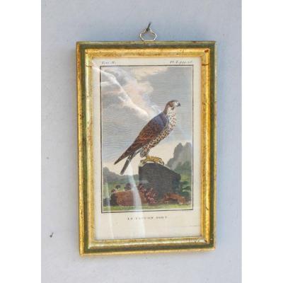 U32-Gravure antique ornithologie Buffon le faucon sort  XVIII siècle