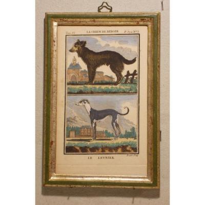 A4 -Gravure antique Buffon quadrupèdes le chien de Berger - le levrier  18ème siècle