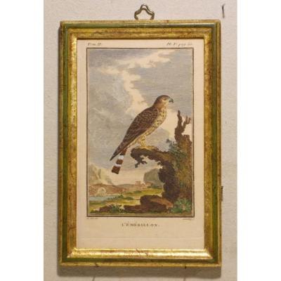 U33  Gravure antique ornithologie Buffon l' émérillon 18ème siècle