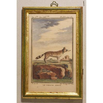 A6 -Gravure antique Buffon quadrupèdes le chacal adive  18ème siècle