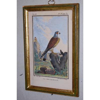 U43 Gravure antique ornithologie Buffon la Cresserelle 18ème siècle