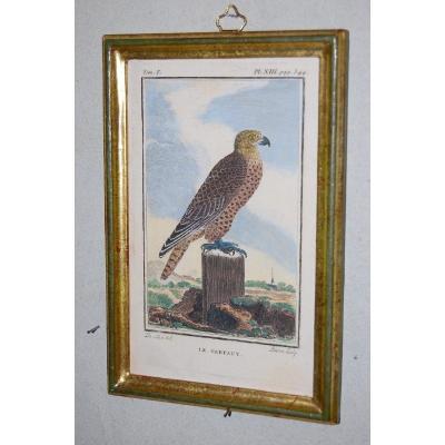 U46 Gravure antique ornithologie Buffon le Gerfaut 18ème siècle