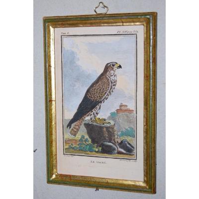 U47 Gravure antique ornithologie Buffon le Sacre 18ème siècle