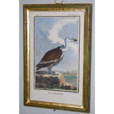 U48 Gravure antique ornithologie Buffon le Vautour 18ème siècle