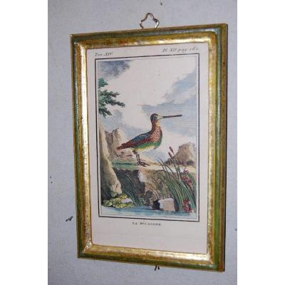 U49 Gravure antique ornithologie Buffon la Bécassine 18ème siècle