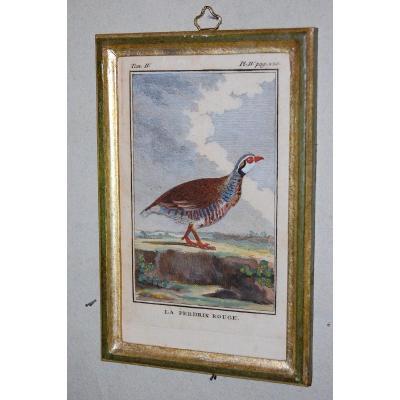 U51 Gravure antique ornithologie Buffon la Perdrix rouge 18ème siècle