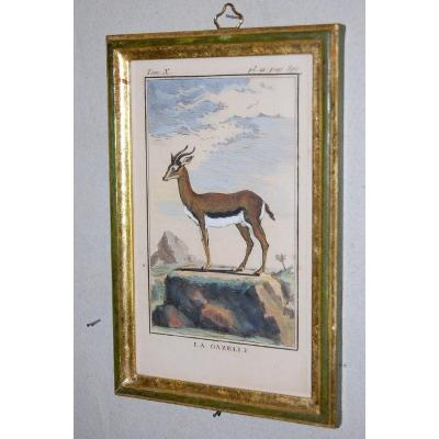 A27 -Gravure antique Buffon quadrupèdes la Gazelle 18ème siècle