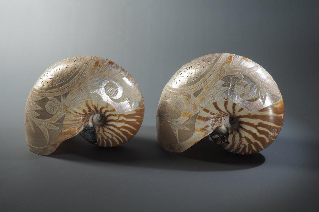 Nautilus Shells, Engraving.