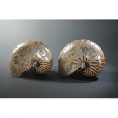 Nautilus Shells, Engraving.
