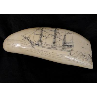 Scrimshaw Dent Morse Cachalot Ivoire Engraved Boat Ship Sailboat XIX