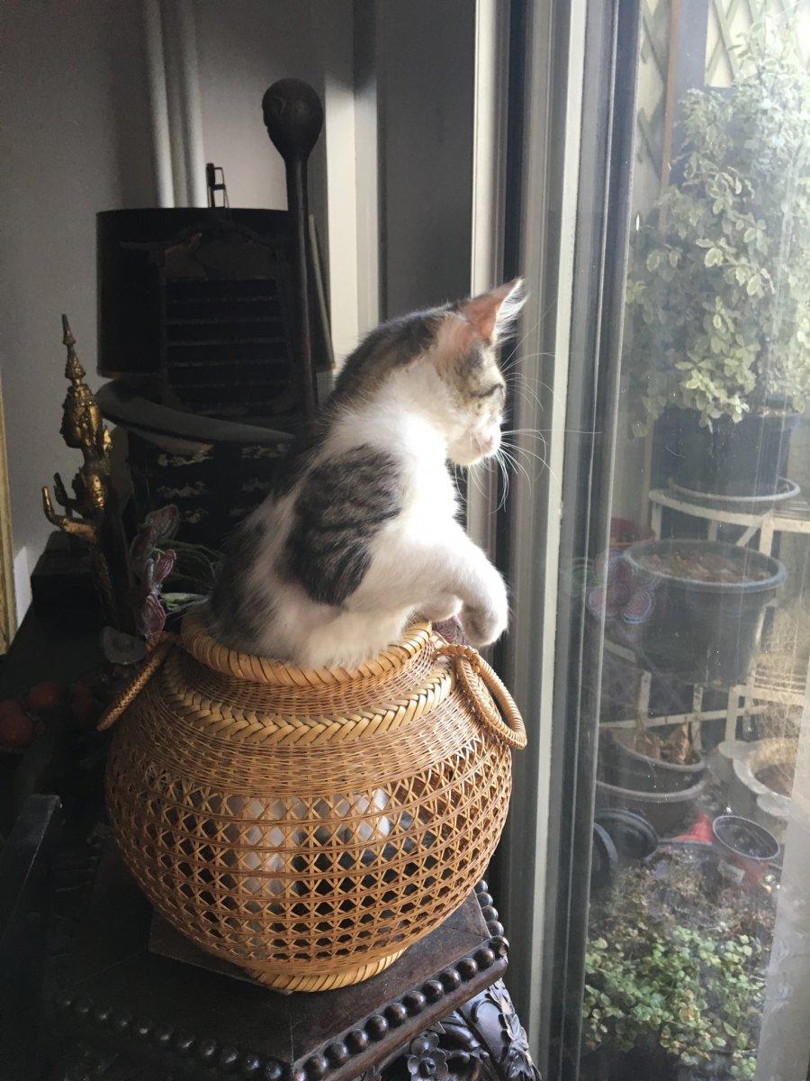 Vase à Ikebana , Rotin Tressé, Signé, Japon-photo-6