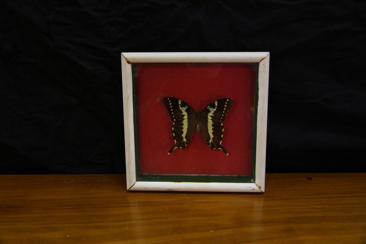 Butterfly Under Glass-photo-2
