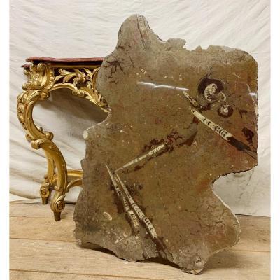 Plaque En Marbre Poli Avec Fossiles D'ammonites et d'Orthoceras