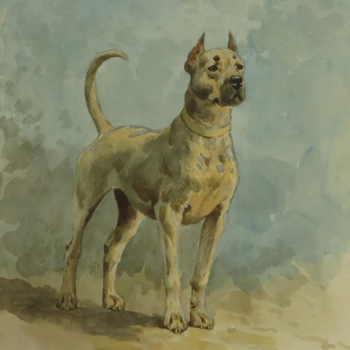 Charles Fernand de CONDAMY Aquarelle Chien DANOIS Dogue 29 X 22 Cm