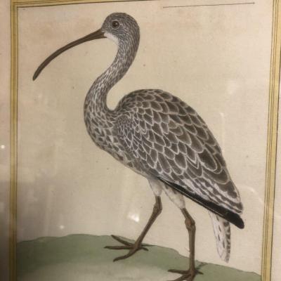 François Nicolas MARTINET (1725/31-1804) d'après LE COURLY Estampe rehaussée d'aquarelle oiseau