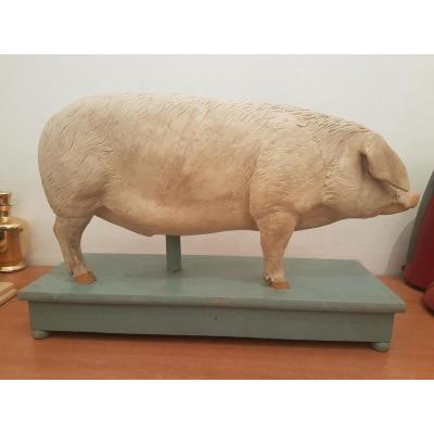 Cochon platre Ecorche Ecole Veterainaire