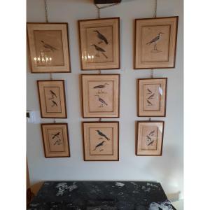 Suite De Douze Gravures D'époque XIXème Siècle Représentant Des Oiseaux.