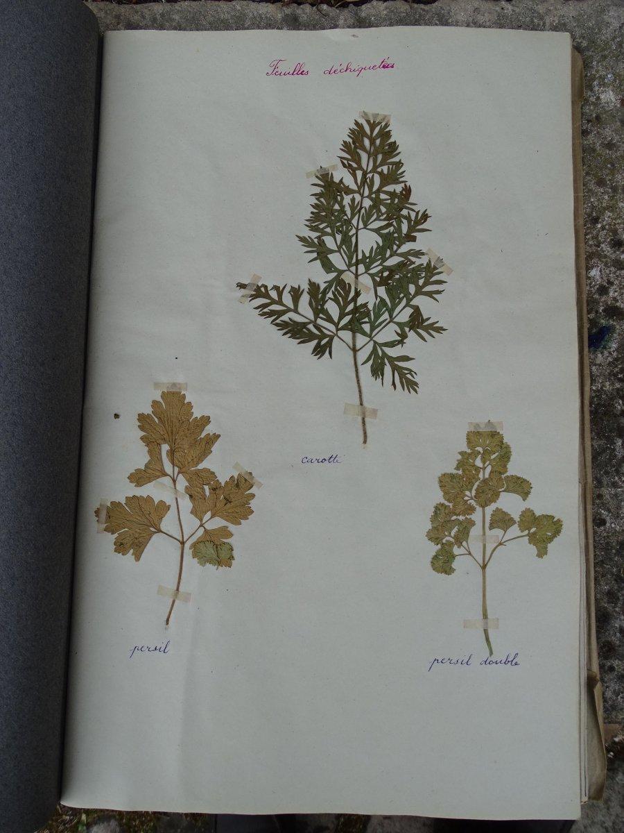 Trois petits herbiers d'école de filles issus de la Nièvre et la Vienne en 1932-1934-photo-1