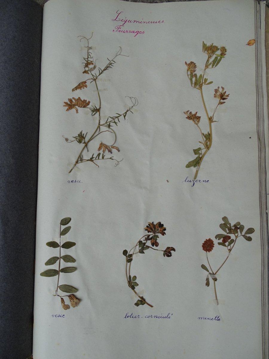 Trois petits herbiers d'école de filles issus de la Nièvre et la Vienne en 1932-1934-photo-2