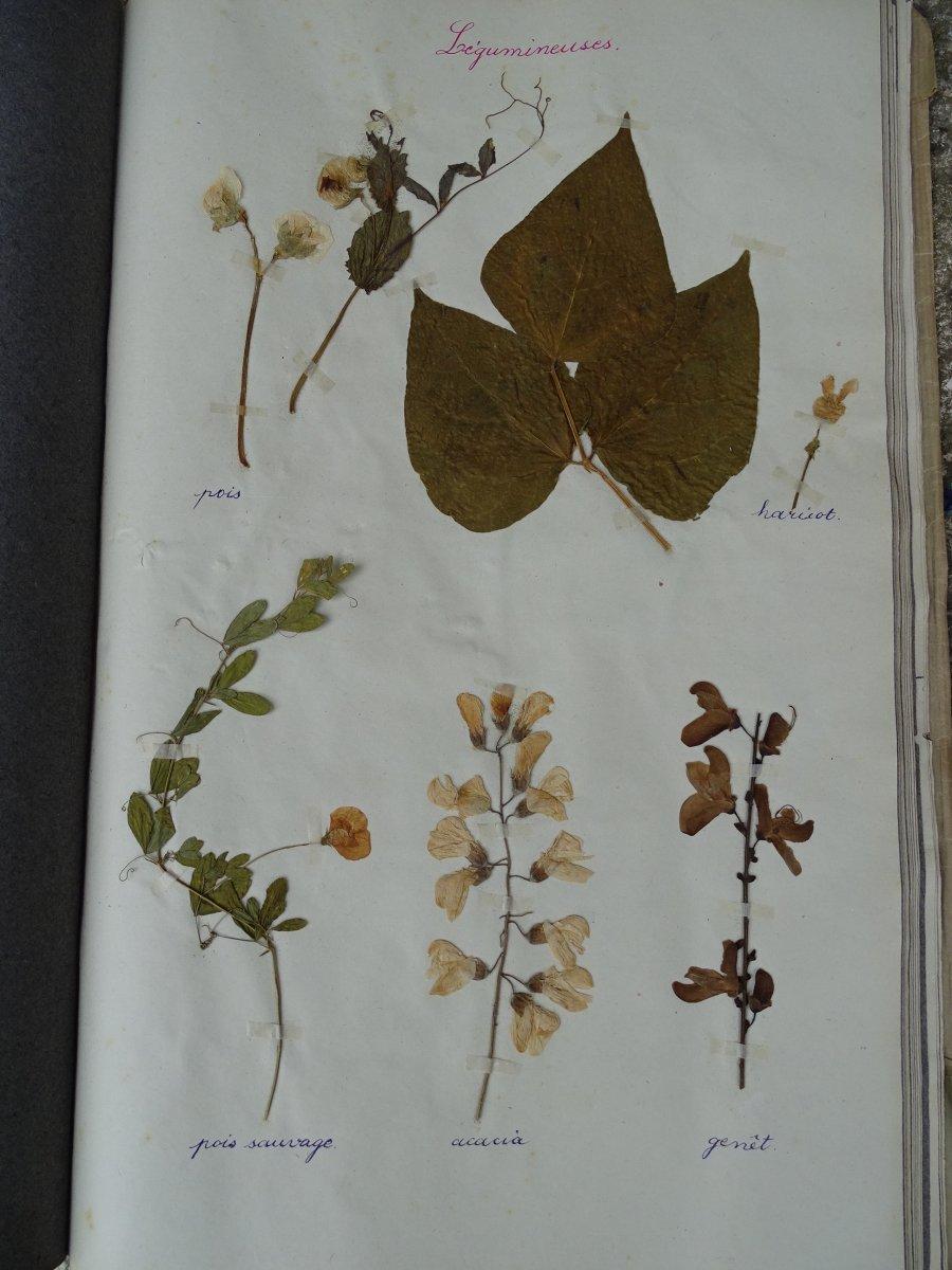 Trois petits herbiers d'école de filles issus de la Nièvre et la Vienne en 1932-1934-photo-3