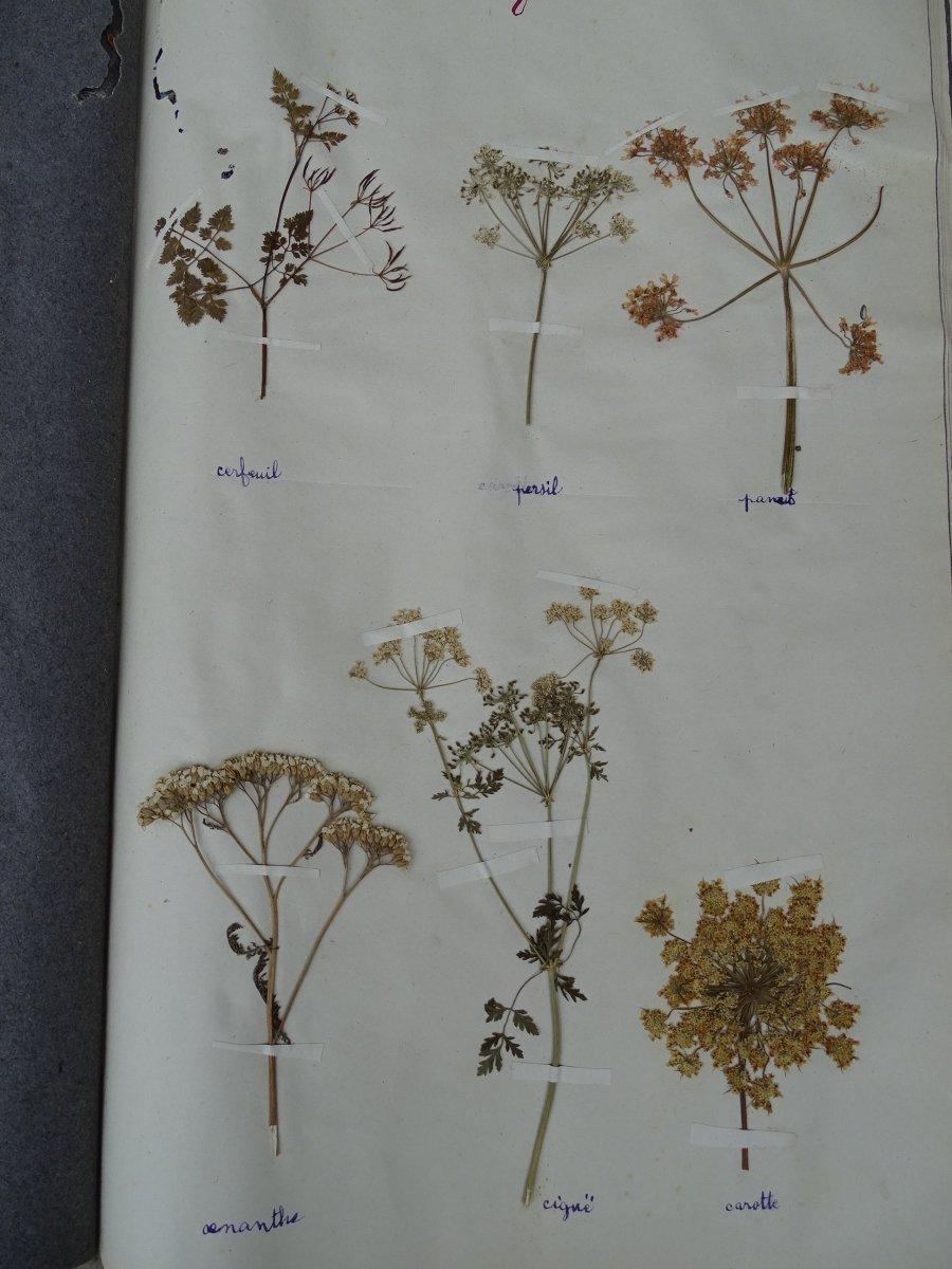Trois petits herbiers d'école de filles issus de la Nièvre et la Vienne en 1932-1934