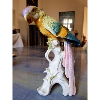 Large Saxe Porcelain Parrot