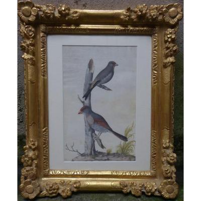 """""""Oiseaux""""  Gouache ,Velin ,Ecole de Nicolas Robert (17 eme)"""