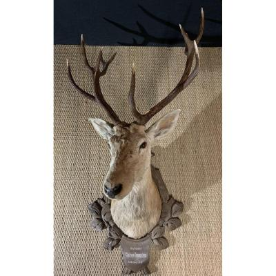 Large Black Forest Hunting Trophy, XXth