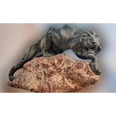 Lionne Rugissant Bronze De G.merculiano (1859-1935)