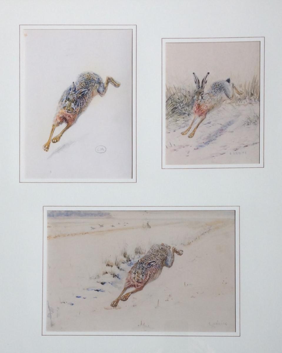 Edouard Mérite, Hares
