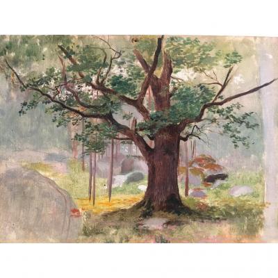 Georges Antoine Rochegrosse (1859-1938), Etude De Chêne à Fontainebleau, Huile Sur Panneau