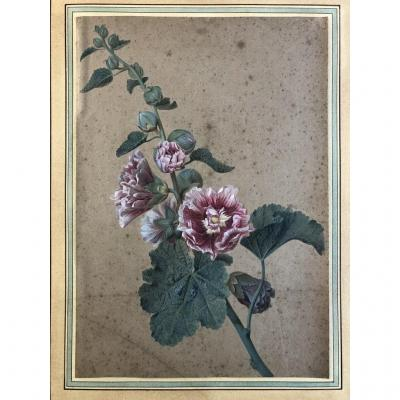 Gérard Van Spaendonck (1746-1822) (entourage Of), Study Of Hollyhocks, Gouache On Paper