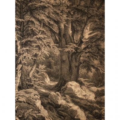 Nineteenth French School, Trees In The Forest Of Fontainebleau, Ink Drawing
