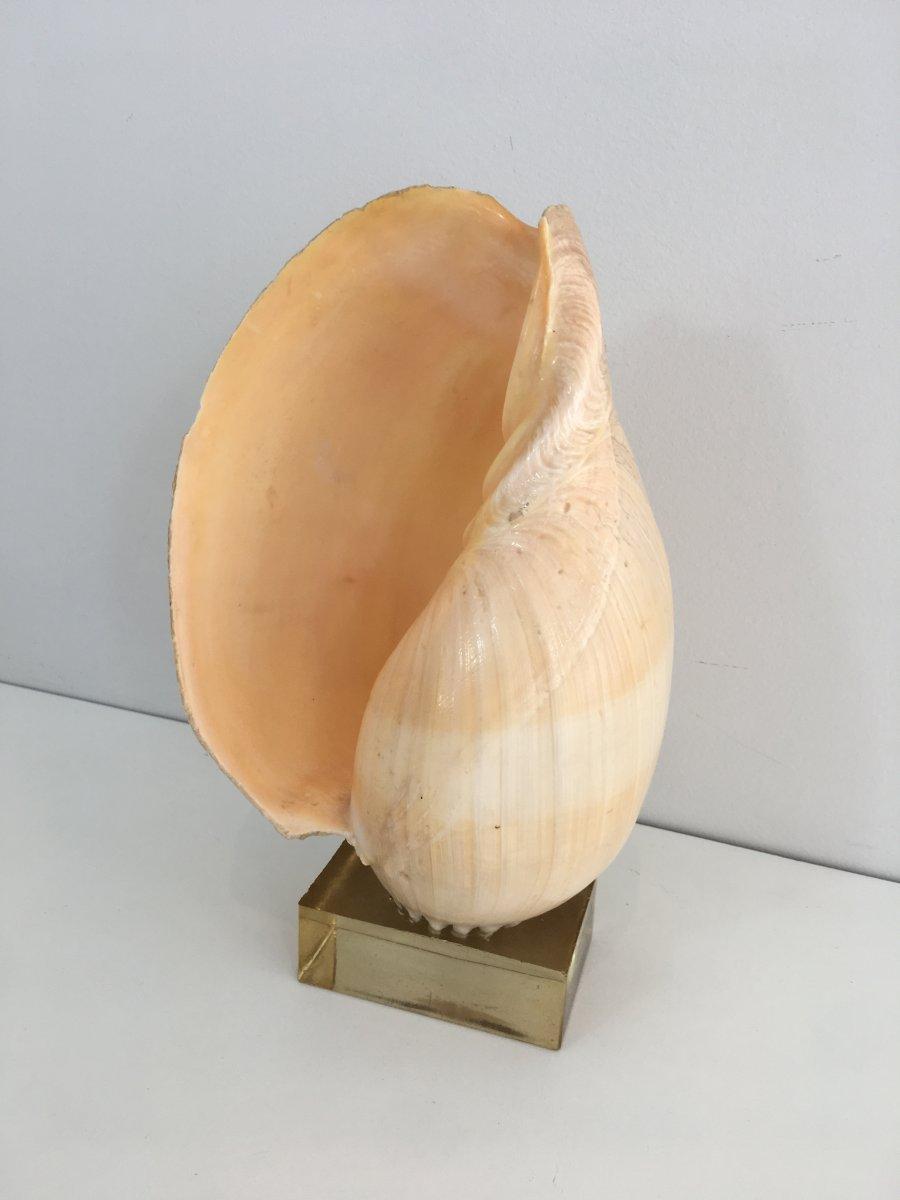 Coquillage Décoratif Sur Socle En Plexiglass. French. Circa 1970