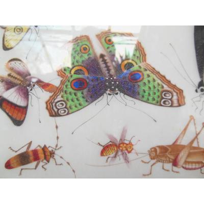 """Aquarelle Sur Papier De Riz """"insectes"""""""