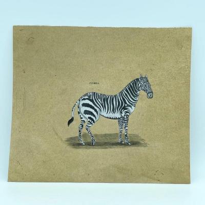 Quatre Dessins Rehaussés De Ayak , Zebra , Giraffe Et Rhinoceros Vers 1800