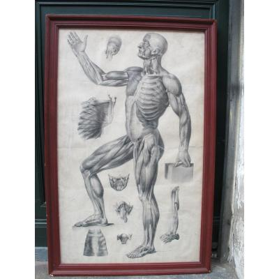 Two Anatomical Plates