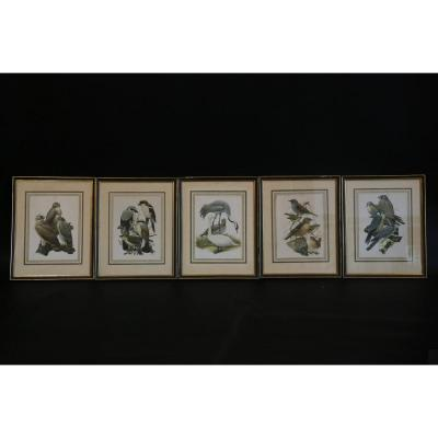 Series Of 5 Engravings Of Colored Birds