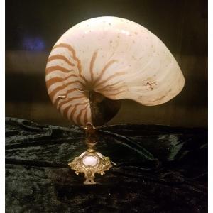 """Coquillage """" Nautile """" sur pied tripode en bronze - XIXe Siècle"""