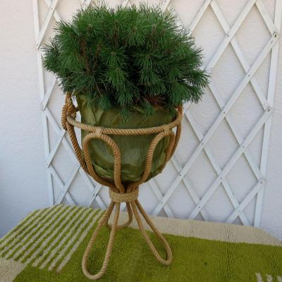 Rope Plant Holder In The Taste Of Audoux Minet Circa 1950