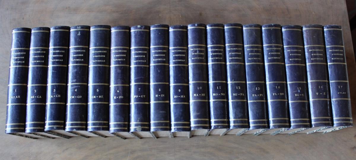 Dictionnaire Classique d'Histoire Naturelle De 1822